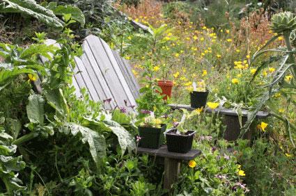 Image of Overgrown garden