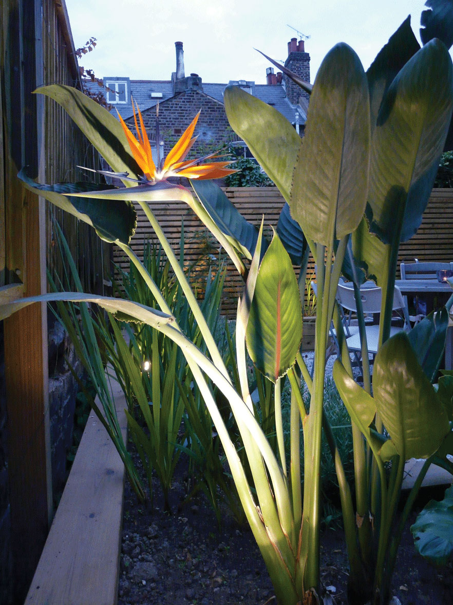 Image of Bird of Paradise