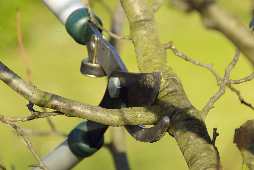 Image of Pruning and branch removal